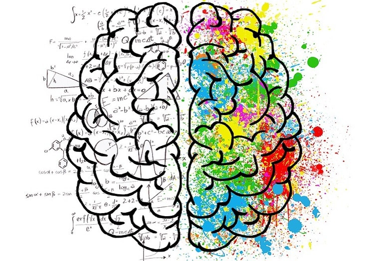 The analytical and the creative hemisphere of the brain