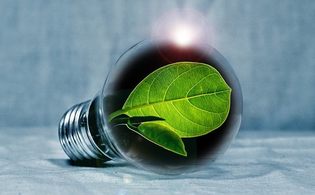 Going green with a business is the good thing to do these days.