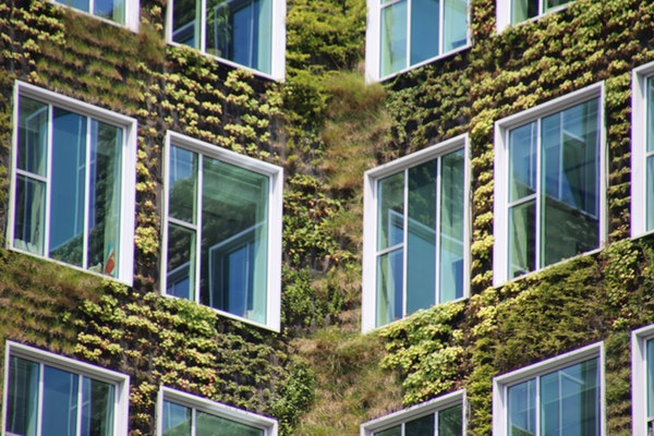 building exterior green vertical garden